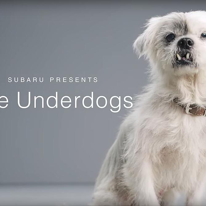 Subaru Presents The Underdogs